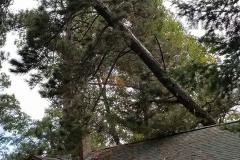 TreeonCabin2