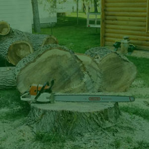 Crosslake - Brainerd Tree Services
