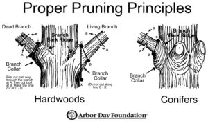 Proper Tree Pruning Techniques