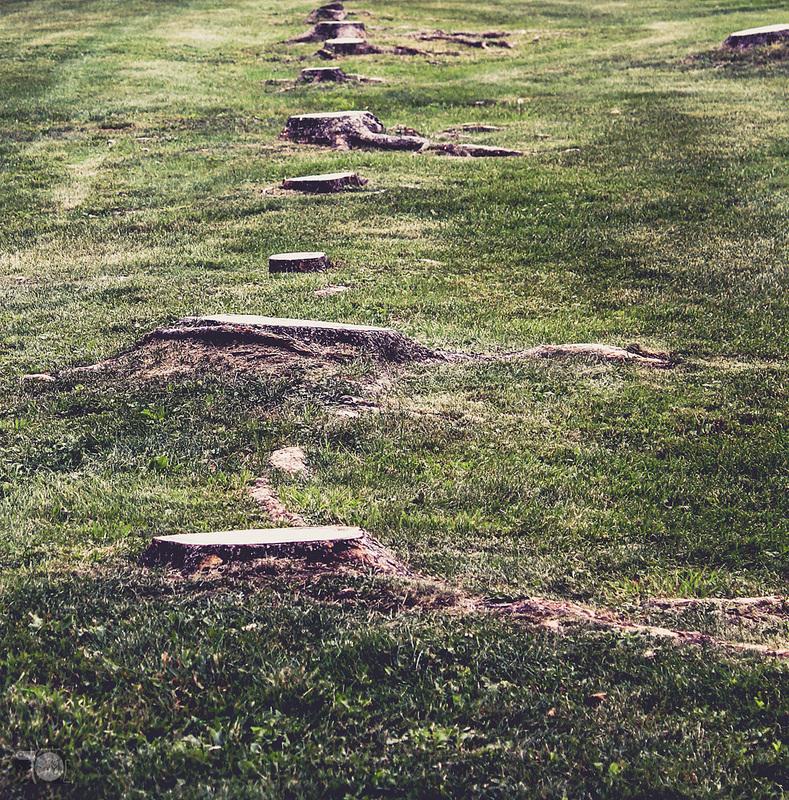 Crosslake Area Stump Grinding