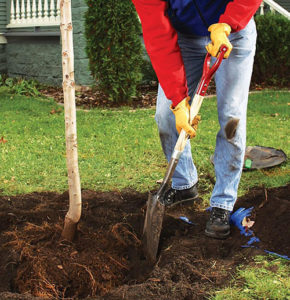 Brainerd Area Tree Planting Services